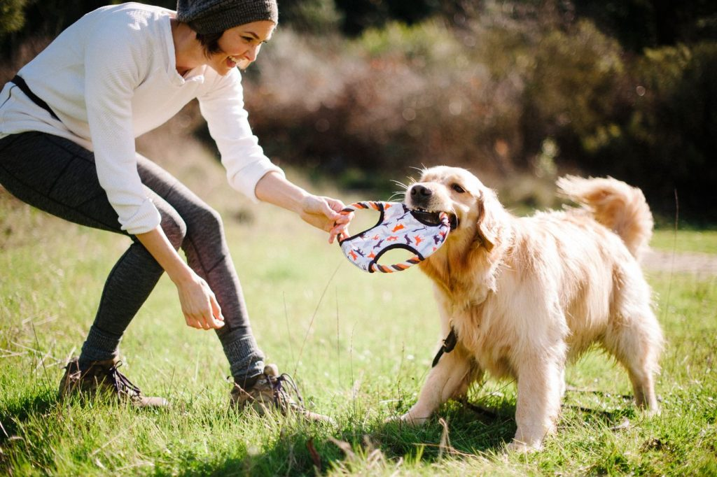 Dogs playing with a girl: Why Dogs Are the Best Pets for You?