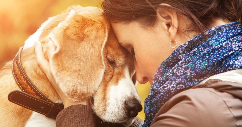 Dogs help emotional development: Why Dogs Are the Best Pets for You?