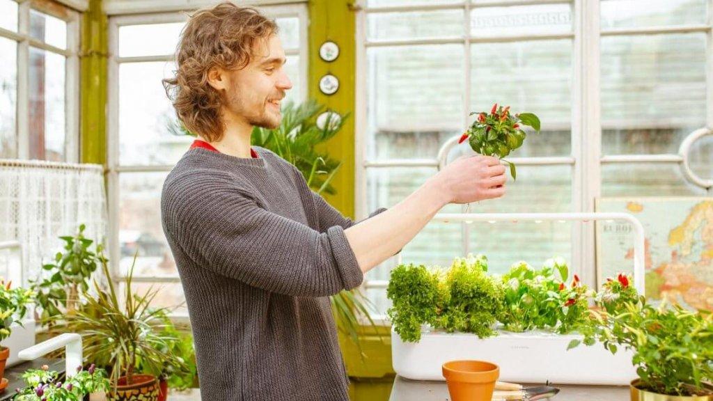 Hydroponic Garden; Hydroponic Gardening