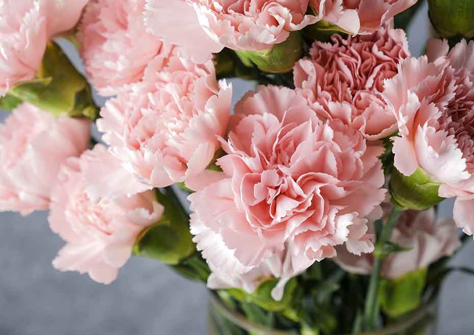Carnation; 13 Captivating Flowers That Start With C