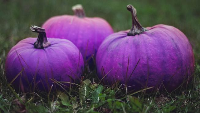 What Do Purple Pumpkins Mean On Halloween? Say Yes to Trick-&-Treats!