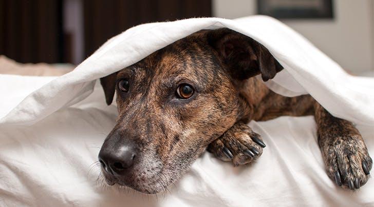 anxious-dog