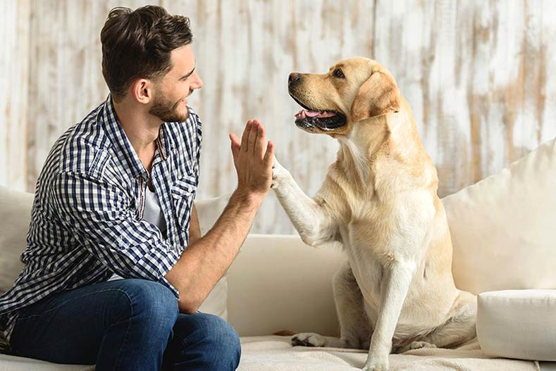 companionship-why-dogs-follow-you-to-the-bathroom