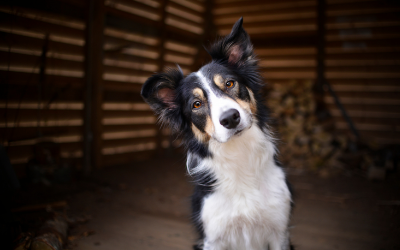 dog-staring-at-you