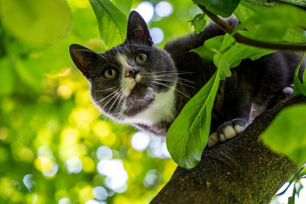 How To Get A Cat Out Of A Tree?