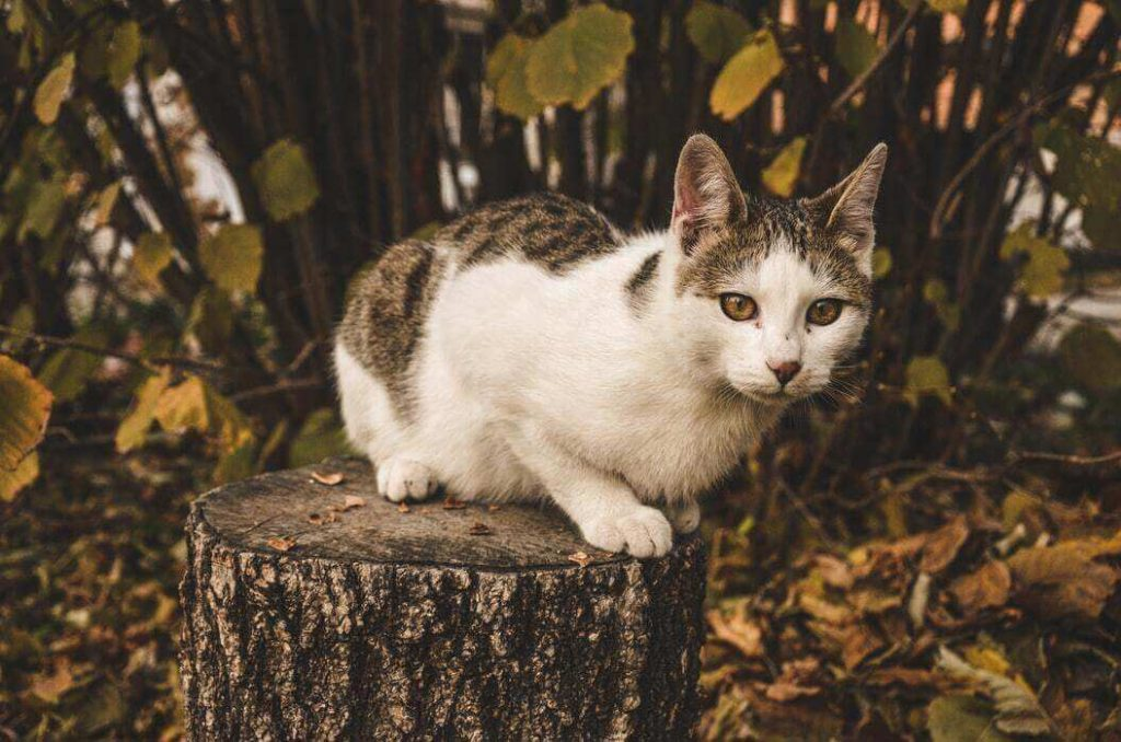 9 Ways To Get A Cat Out Of A Tree