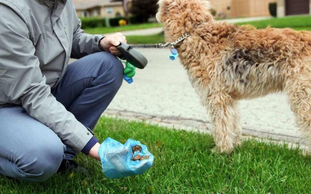 gloves-and-lotion-make-a-dog-poop
