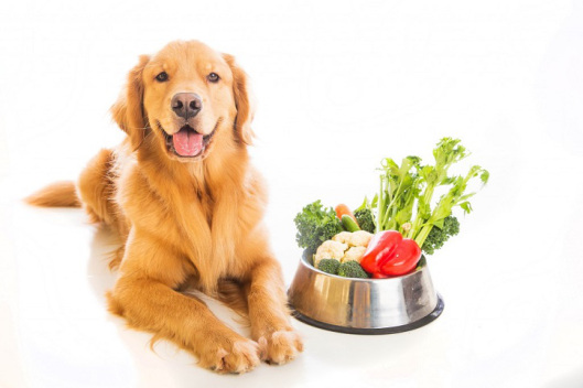 healthy-diet-for-dogs