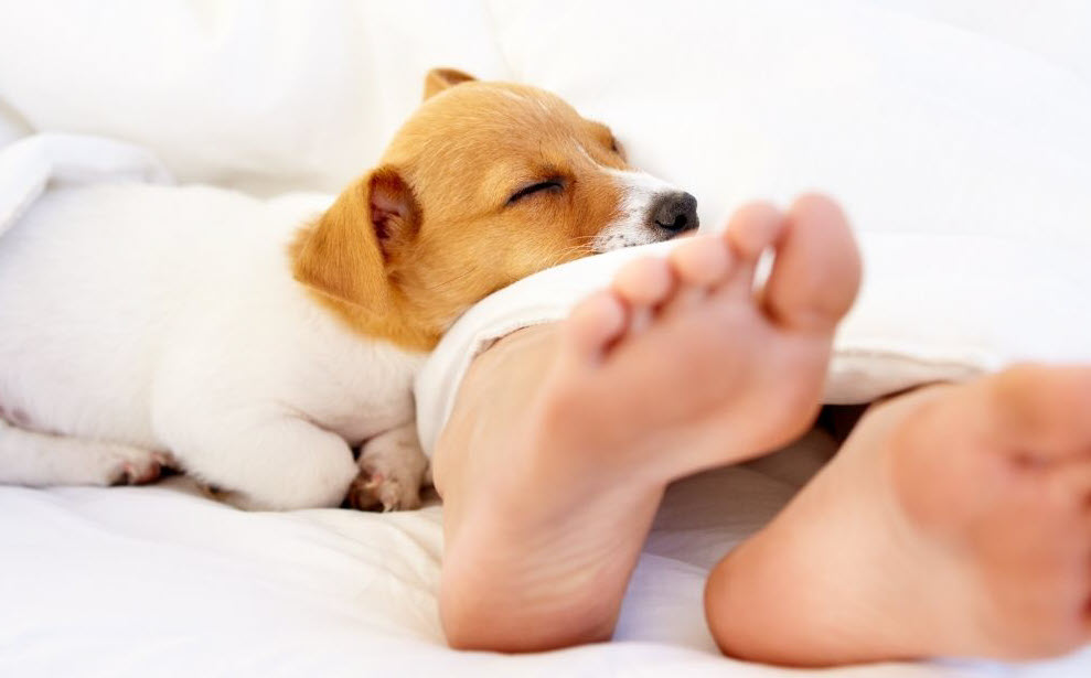 obsession-dogs-lick-your-feet