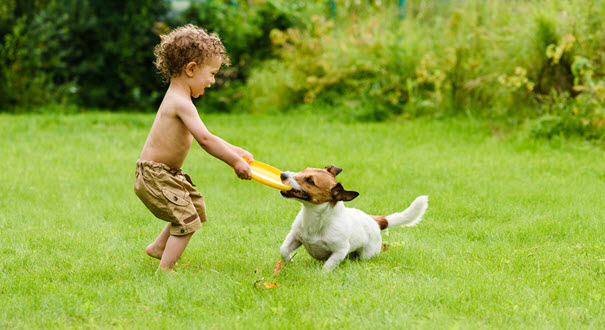 playing-with-your-dog