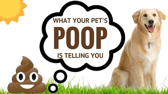 poop pattern of dogs