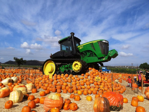 7 Best Pumpkin Patches In LA; Enjoy Halloween To The Fullest