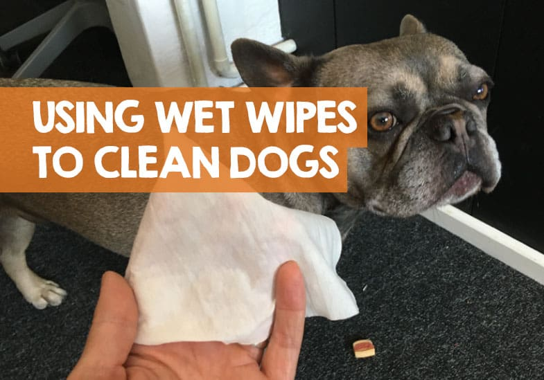 wipes-for-dog